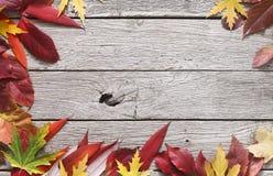 Fundo sazonal do outono, folhas vermelhas de Rowan e folhas de bordo amarelas Imagens de Stock Royalty Free