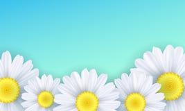 Fundo sazonal Flores de Camomiles em um fundo verde Ilustração do vetor Imagem de Stock