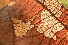 Fundo secado da licença Textura natural no foco obscuro Foto de Stock Royalty Free