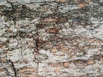 Fundo secado da textura da árvore de casca em marrom, bege, vermelho, close-up fotografia de stock
