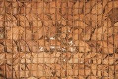 Fundo secado da textura das folhas Imagem de Stock Royalty Free