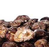Fundo secado do cogumelo de Shiitake com espaço da cópia Imagens de Stock Royalty Free