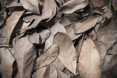 Fundo seco da textura da folha Imagem de Stock