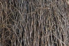 Fundo seco da textura dos ramos, fundo da natureza Foto de Stock Royalty Free
