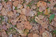 Fundo seco da textura da folha Fotografia de Stock