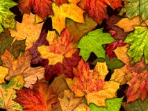 Fundo seco das folhas de outono Imagens de Stock Royalty Free