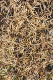 Fundo seco das folhas de outono Fotos de Stock Royalty Free