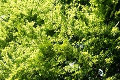 Fundo selvagem 50,6 Megapixels 6480 da árvore de floresta com 4320 pixéis fotos de stock royalty free