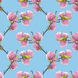 Fundo sem emenda bonito com ramos de árvore de florescência da magnólia Imagem de Stock