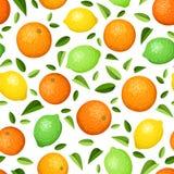 Fundo sem emenda com citrinas. ilustração royalty free
