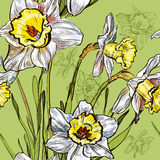 Fundo sem emenda com a flor do narciso da mola ilustração do vetor