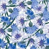 Fundo sem emenda com flor do prado Fotografia de Stock Royalty Free