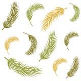 Fundo sem emenda com folhas de palmeira Ilustração do Vetor