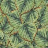 Fundo sem emenda com folhas do Linden Imagens de Stock