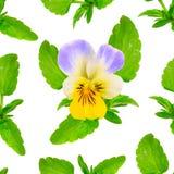 Fundo sem emenda com a viola tricolor Isolado no branco fotos de stock royalty free