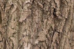 Fundo sem emenda da casca de árvore Textura tileable de Brown da árvore velha fotografia de stock