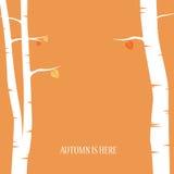Fundo sem emenda das folhas de outono Árvores de vidoeiro Fotografia de Stock Royalty Free