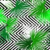 Fundo sem emenda das folhas de palmeira tropicais Imagens de Stock