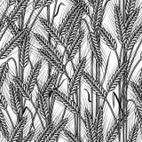 Fundo sem emenda das orelhas do cereal preto e branco Fotografia de Stock