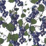 Fundo sem emenda das uvas Ilustração desenhada mão Imagem de Stock Royalty Free