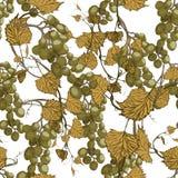 Fundo sem emenda das uvas Ilustração desenhada mão Imagens de Stock Royalty Free