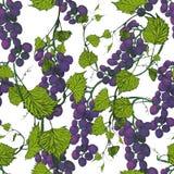 Fundo sem emenda das uvas Ilustração desenhada mão Imagens de Stock