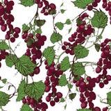 Fundo sem emenda das uvas Ilustração desenhada mão Fotografia de Stock
