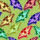 Fundo sem emenda de borboletas coloridas. Imagens de Stock