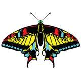 Fundo sem emenda de borboletas coloridas. Fotografia de Stock Royalty Free