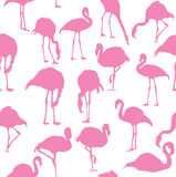 Fundo sem emenda do flamingo do vetor Fotografia de Stock