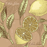 Fundo sem emenda do limão do vintage Imagens de Stock Royalty Free