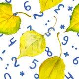 Fundo sem emenda do outono com folhas e números do amarelo Foto de Stock