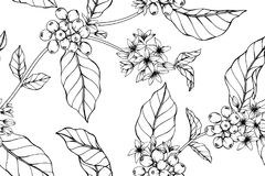 Fundo sem emenda do teste padrão de flor do café imagens de stock
