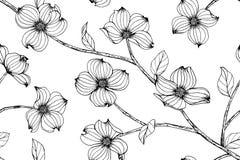 Fundo sem emenda do teste padrão de flor do corniso fotos de stock royalty free