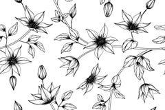 Fundo sem emenda do teste padrão de flor da clematite foto de stock royalty free