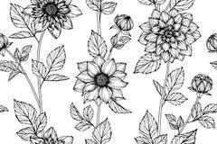 Fundo sem emenda do teste padrão de flor da dália Foto de Stock