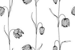 Fundo sem emenda do teste padrão de flor do Fritillaria Foto de Stock