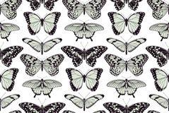 Fundo sem emenda do vintage da borboleta Fotografia de Stock Royalty Free