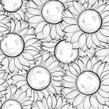 Fundo sem emenda preto e branco bonito com girassóis. Linhas e cursos de contorno desenhados à mão Fotos de Stock Royalty Free