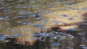 Fundo sob a forma da água de fluxo com reflexões douradas video estoque