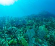 Fundo subaquático com corais macios e duros, Largo de Cayo imagem de stock