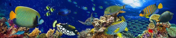 Fundo subaquático do panorama da paisagem do recife de corais Fotos de Stock Royalty Free