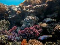Fundo subaquático do recife de corais Imagem de Stock