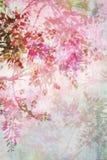 Fundo sujo com beira floral Imagens de Stock