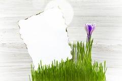 Fundo sujo do papel da parte do açafrão da grama Imagem de Stock