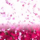 Fundo temático asiático da flor de cereja de Sakura ilustração stock