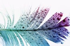 Fundo Textured com a pena colorida do pássaro em grandes e gotas brilhantes pequenas da água no branco foto de stock royalty free