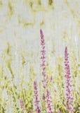 Fundo Textured do Wildflower Foto de Stock