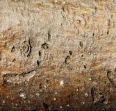 Fundo textured madeira Foto de Stock Royalty Free