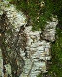 Fundo textured natural fotografia de stock royalty free